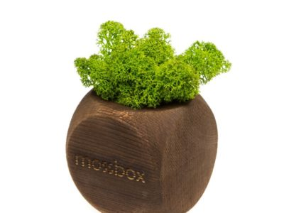 Интерьерный мох MossBox Fire green dice