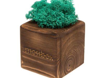 Интерьерный мох MossBox Fire moray