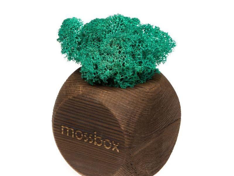 Интерьерный мох MossBox Fire moray dice