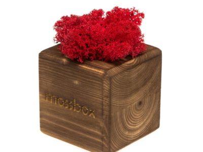 Интерьерный мох MossBox Fire red cube