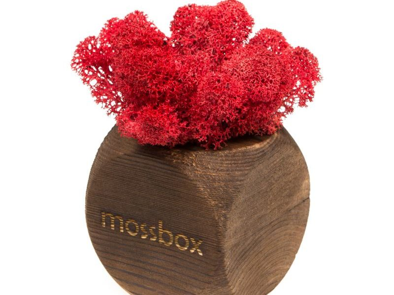 Интерьерный мох MossBox Fire red dice