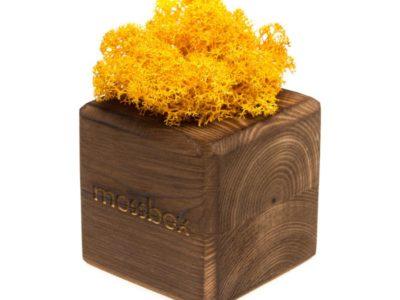 Интерьерный мох MossBox Fire yellow cube