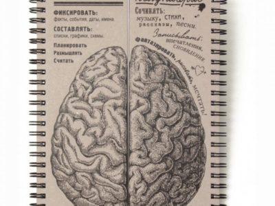 Блокнот Мозги — равные полушария