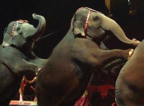 Цирковое представление для двоих