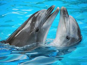 Дельфинарий для двоих