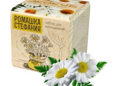 Эко куб Ромашка Стефания