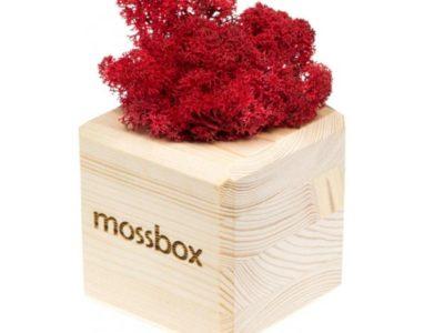 Интерьерный мох MossBox wooden red cube